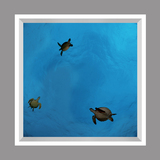 Ceiling Mural kf-se-df060_4x4md_r44 by David Fleetham